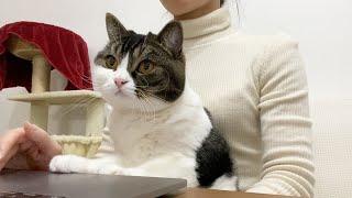 親子猫が可愛かったので一緒に仕事してもらいましたw