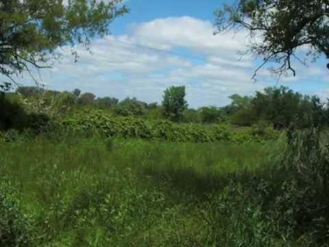 Campos Verdes - YouTube