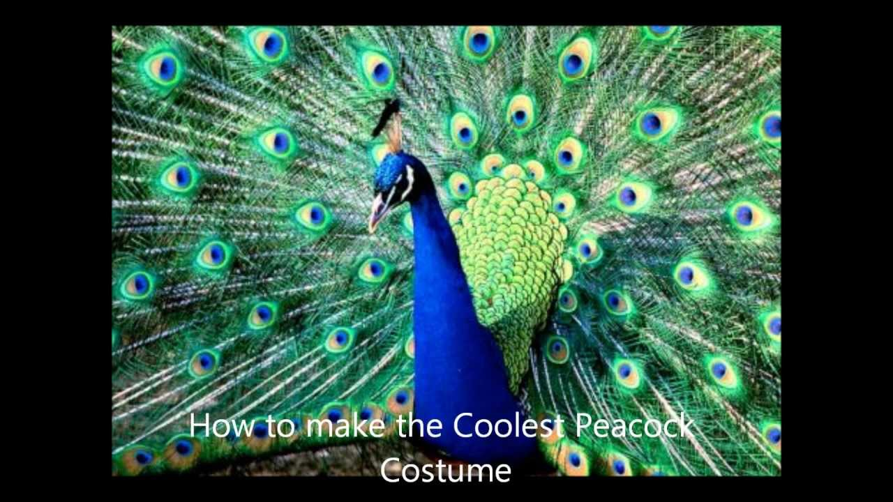 How to make the Coolest Peacock costume - YouTube