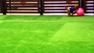 室内ドッグラン サッカー ドリブル 2.