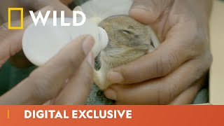 Baby Rabbit Emergency  | Critter Fixers | National Geographic Wild UK