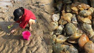 初次赶海挖地三尺无收获,找到妙招后,半小时就收获一桶蛤蜊