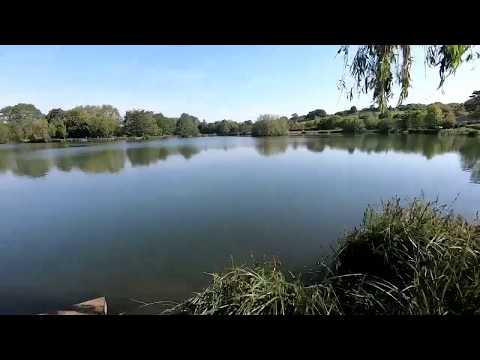 D'LOOSE CARP SESSIONS - 24hrs On RIB VALLEY ANGLING (3 Lakes, Ware, Herts)