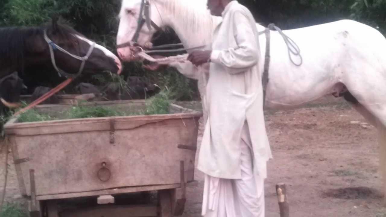 My form House horses - YouTube for Darshan Horse Farm  177nar