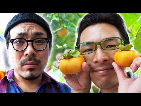 【柿が腐り始めてる】グルメだけが知ってる柿の木レストランの激ウマフルコース|Persimmon restaurant.