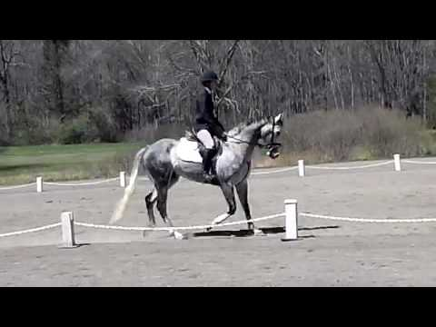 Andy dressage at Frazier