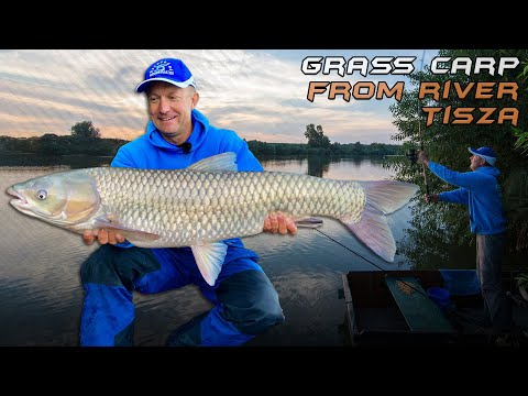 Wild Water Adventures part 36.  Boat Fishing for Grass Carp on River Tisza   A movie by Gábor Döme