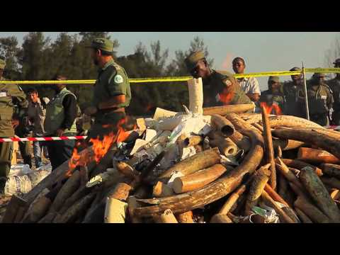 Mozambique makes a stand against wildlife crime