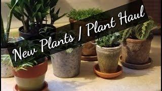 New Plants/ Plant Haul == I'm A Crazy Plant Lady!