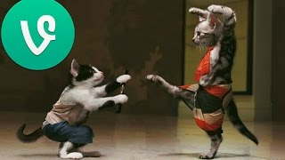 funny pet and animal vines of 2014