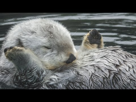 Caring for Elderly Sea Otter Eddie