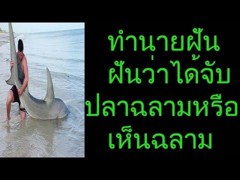 ฝันว่าได้จับปลาฉลาม หรือ ฝันเห็นฉลาม(พร้อมเลขเด็ด)