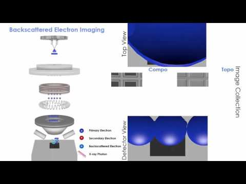 Scanning Electron Microscopy (SEM): animation of 3 types of imaging