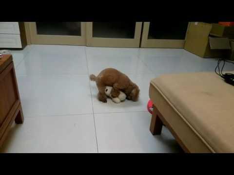 小狗發情 幹娃娃狗頭 - YouTube