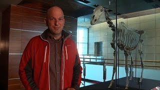 Phar Lap Skeleton - Tales from Te Papa episode 37