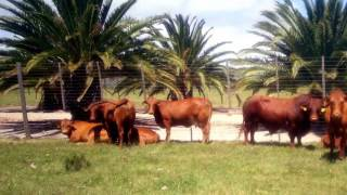 Farms For Sale in Humansdorp, Humansdorp, South Africa for ZAR R 34 000 000