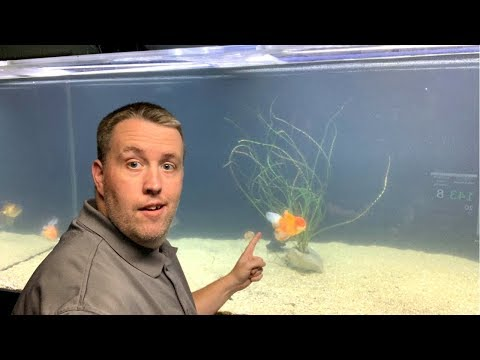 How To Fix Cloudy Fish Tank Water. [Live Stream]