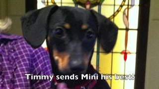 Video Timmy the Barrel Racing Wiener Dog download MP3, 3GP, MP4, WEBM, AVI, FLV Agustus 2018