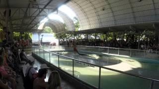 Шоу с крокодилами, кормление крокодилов на крокодиловой ферме в Паттайе, Таиланд