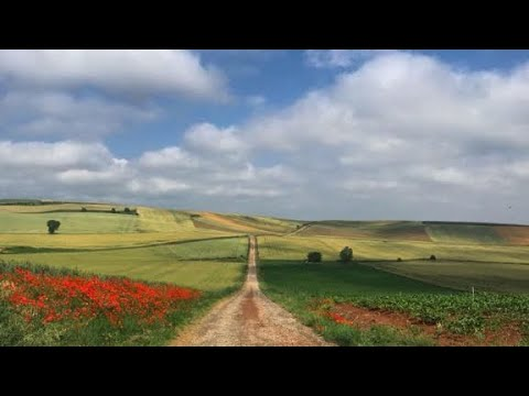 What Is the Best Time of Year to Walk the Camino de Santiago Frances Route?