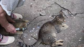 1-обзор. Лечим бездомных кошек! Ставим укол кошке!