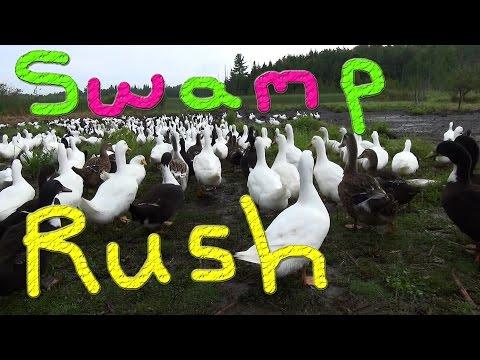 Goose Lee Jr? #25 Raising Ducks For Charity