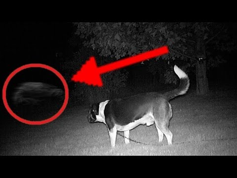 Dog Sees Ghost Caught On Tape