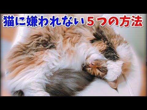 これだけは知っておきたい、猫に嫌われない5つの方法。