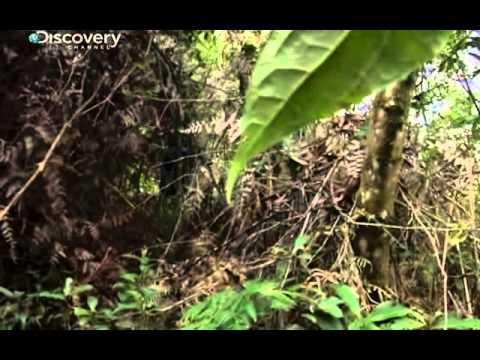Bear Grylls - Guatemala
