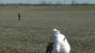 Puppy Training - Retriever Training - Field Marks