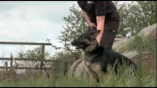 Northumbria Police Dogs Training