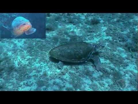 Le tartarughe di mare spiegate ai bambini youtube for Tartarughe di mare domestiche