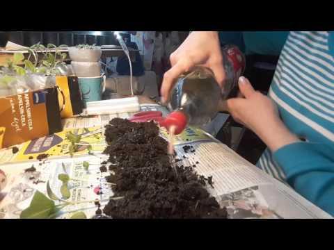 Вопрос: Что говорит о появлении множества улиток на почве?