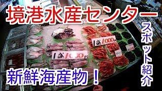 【スポット紹介】境港水産センター:鳥取県境港市