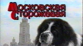 История породы московская сторожевая, Чемпион России Симба