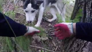 시골개와 함께하는 가을산 능이버섯 수확 산행