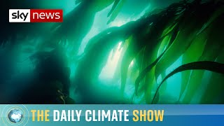 How does the sea battle climate change?