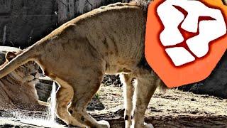 Block Digest #257 - Leaky Lion Sprays Everywhere