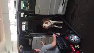 Wheelchair and Seeing Eye dog boarding van