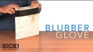 Blubber Glove - Sick Science! #092