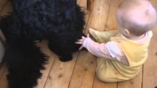Черный терьер, ребенок и огрызок