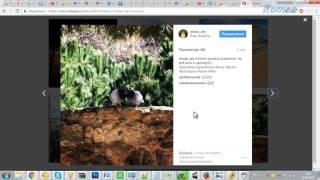 Как скачать видео с Инстаграма без программ