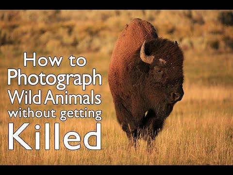 11 Tips to Photograph Wild Animals Without Getting Killed