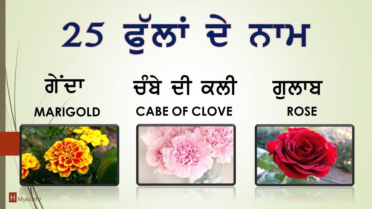 25 Flowers Name In Punjabi English Mykidstv Youtube