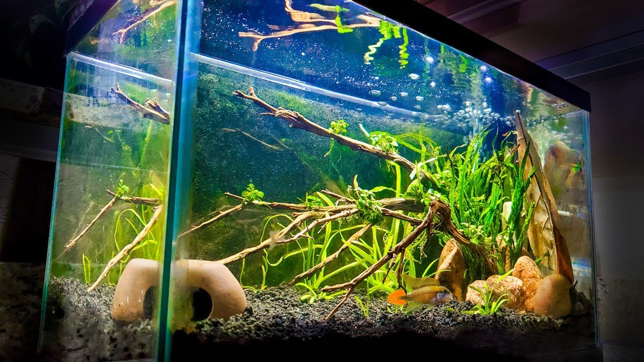 Download How to Set Up an EASY 10-Gallon Aquascape