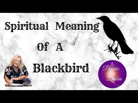 SPIRITUAL MEANING OF A BLACKBIRD- Psychic Debbie Griggs