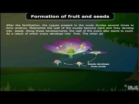 Download Formation of fruit and seeds