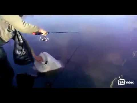 Amazing fishing