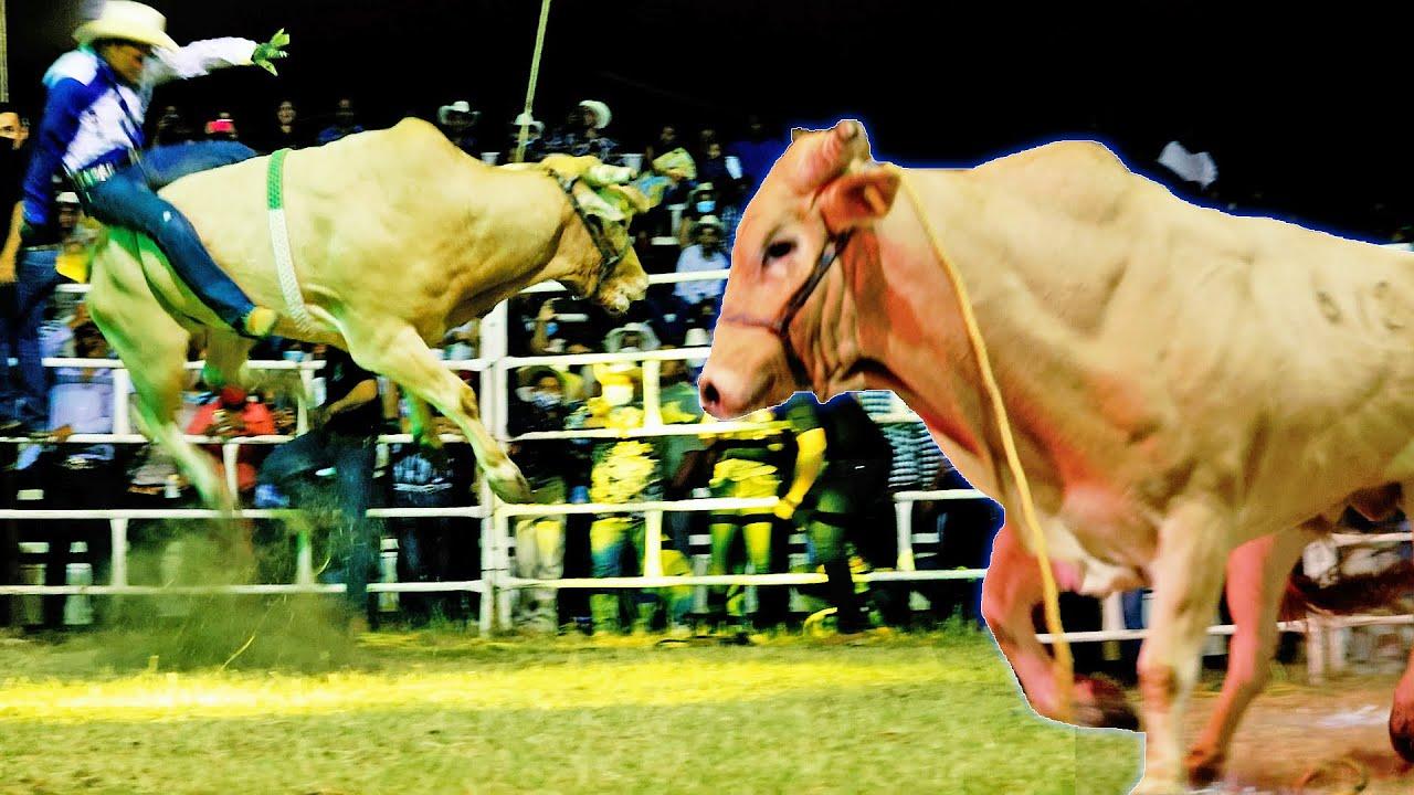 Download ¡¡ES UN FENOMENO ESTE TORO QUE ESPECTACULAR!!Rancho los Destructores en Tehuixtla Morelos
