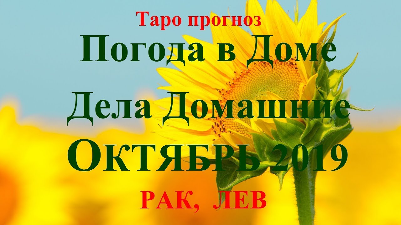 ДЕЛА Домашние – РАК, ЛЕВ — октябрь 2019. Прогноз Tarot.